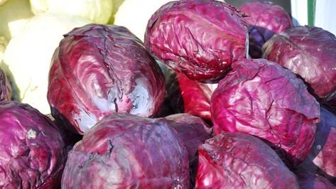 Воронежцы пожертвовали животным зоопарка мешки капусты и яблок
