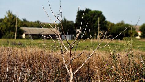 В Воронежской области сохранили оранжевый уровень погодной опасности