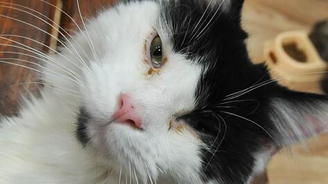 «Грустное зрелище». Воронежские зоозащитники раскритиковали передвижную выставку кошек
