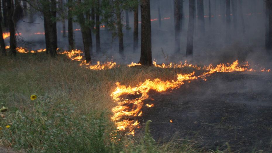 Пожар в лесном массиве на севере Воронежа распространился на 2 га