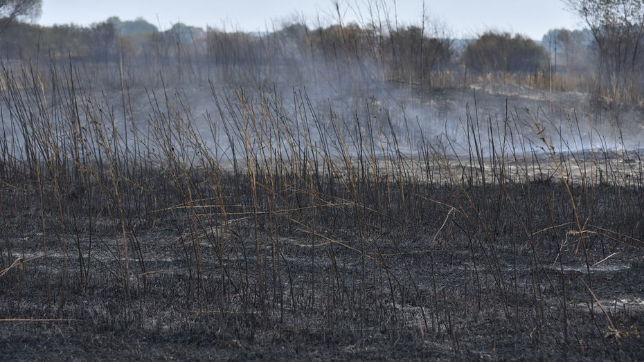 Два крупных природных пожара ликвидировали в Воронежской области