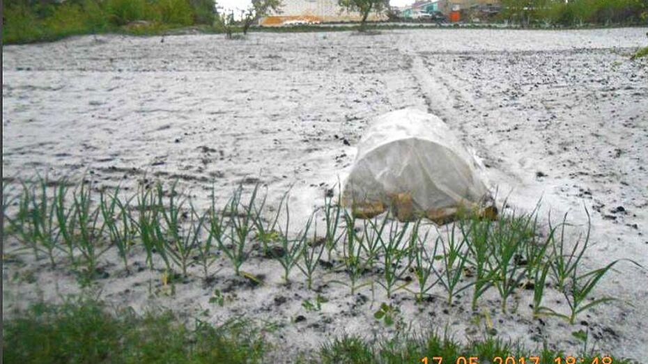 Майский снегопад в Семилукском районе образовал снежный покров