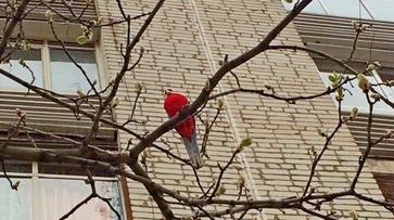 В Воронеже домашние попугаи оказались на улице
