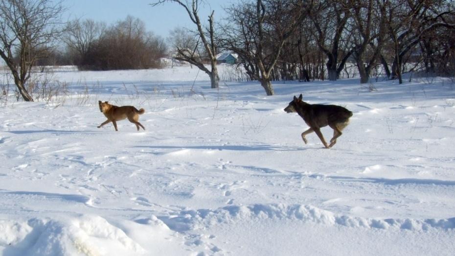 Число бешеных животных в Воронежской области за год уменьшилось вдвое
