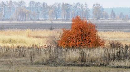 Синоптики пообещали сухую и солнечную погоду в выходные в Воронеже