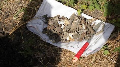 Поисковики начнут исследование места гибели летчика под Воронежем