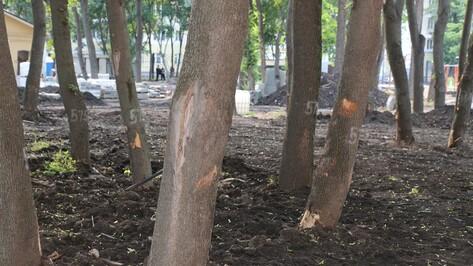 Городские активисты нашли поврежденные деревья в воронежском парке «Орленок»