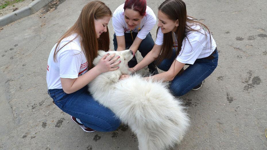 Выставка-пристройство животных пройдет на воронежском «Винзаводе» 4 октября