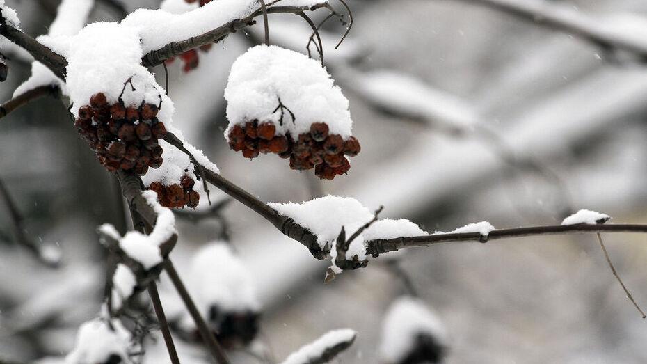 Погода в Воронежской области резко изменится