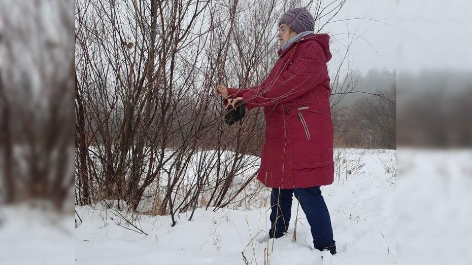 В Грибановском районе в январе распустилась верба