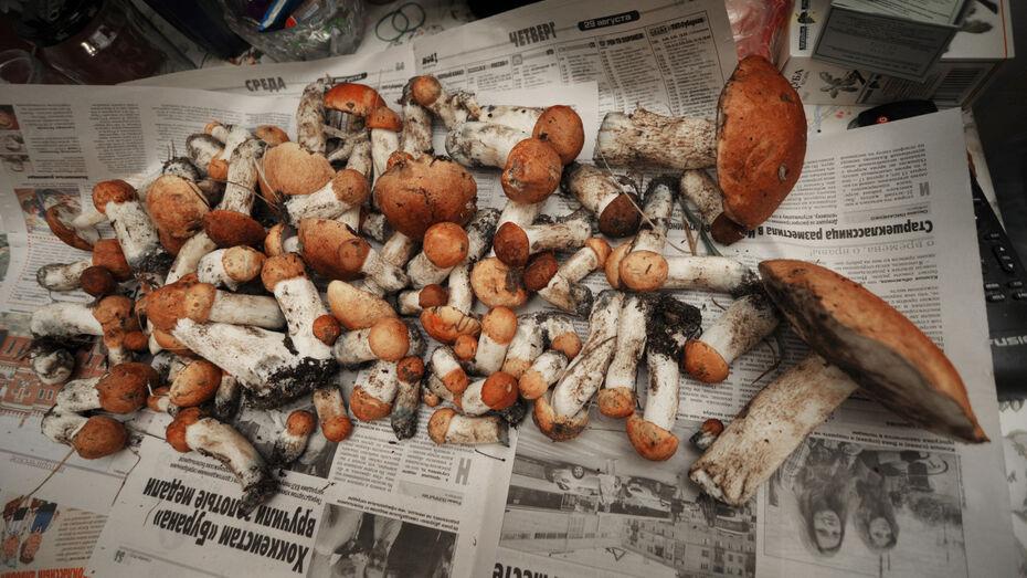 Количество умерших от отравления грибами в Воронеже выросло до 8 человек