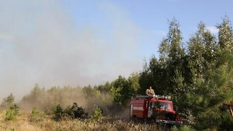 Воронежские лесники до конца января проверят исправность техники для тушения пожаров