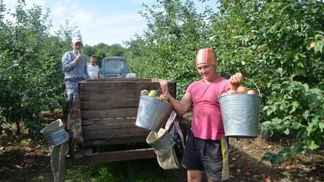Студенты со всей России помогут острогожским аграриям убрать урожай