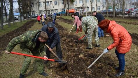 В парках Рамони высадили более 300 деревьев