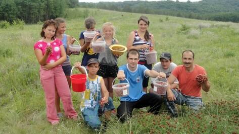 Новохоперские школьники заготовили для школьной столовой 20 кг земляники