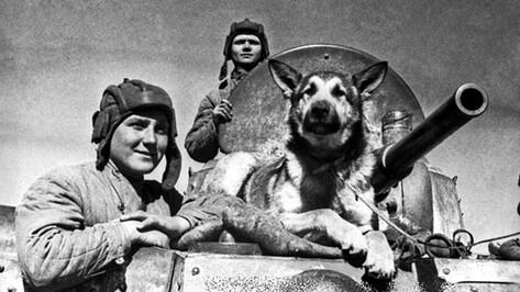 Воронежские зооволонтеры расскажут о подвигах собак и кошек на войне
