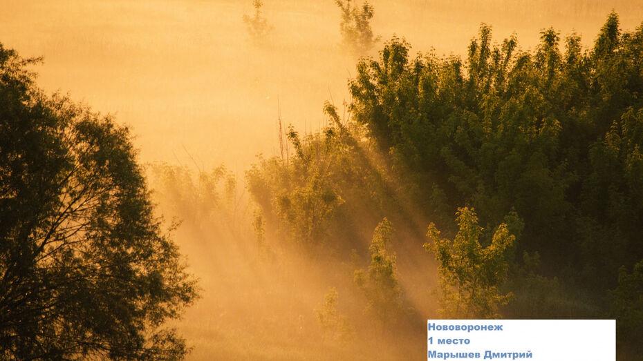 Юные жители Нововоронежа вошли в число победителей международного фотоконкурса