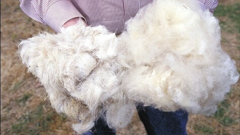Кантемировские пограничники не пустили в Россию 15 килограммов овечьей шерсти