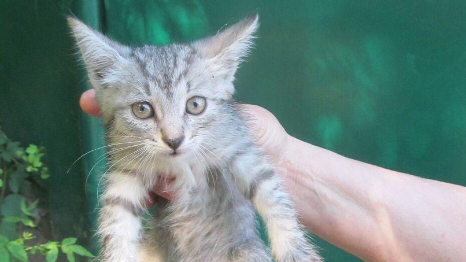 В Воронеже спасатели вытащили котенка из бетонного колодца