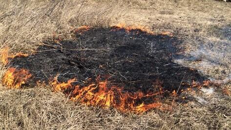 В Воронежской области пожароопасность снизилась до минимума
