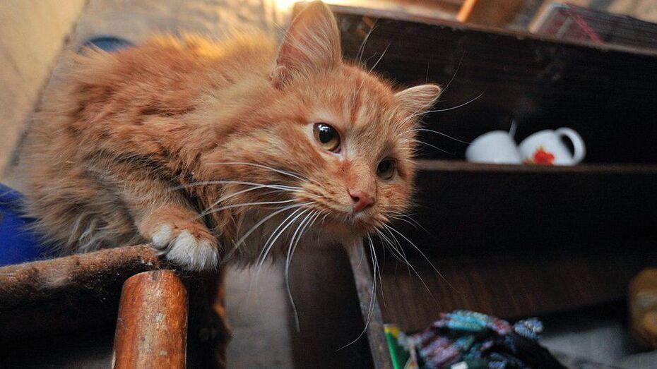 В Острогожском районе бешеная кошка покусала женщину