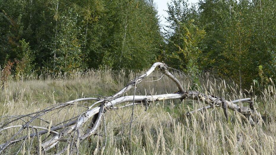 В Воронежской области пропавшего 77-летнего пенсионера нашли живым