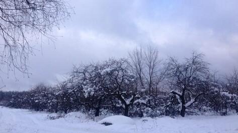 В Воронеже компания «Выбор» вдвое увеличит площадь застройки яблоневого сада