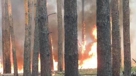 МЧС предупредило о чрезвычайной пожароопасности в Калаче