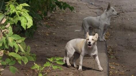 Карантин по бешенству животных ввели в 2 районах Воронежской области