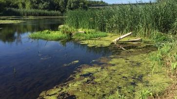В Поворинском районе утонул житель Подмосковья