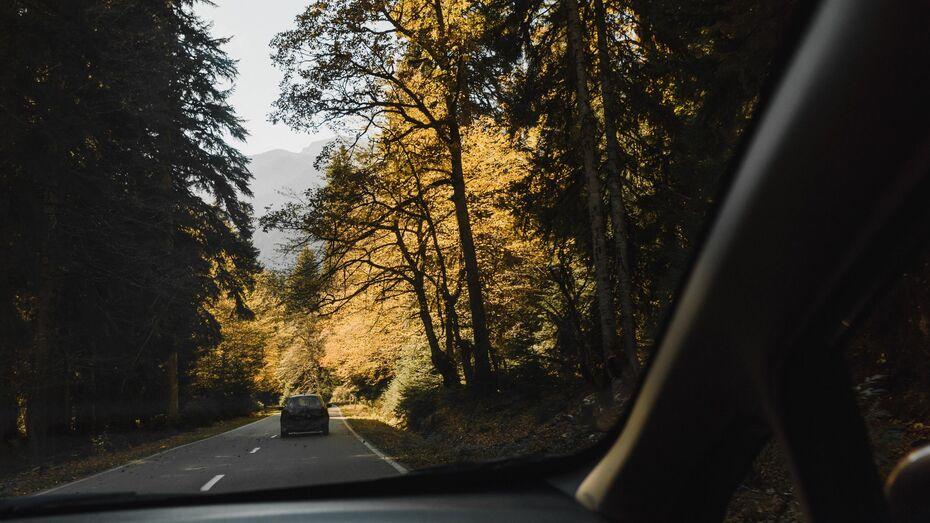 Воронежским автомобилистам снова разрешили заезжать в леса