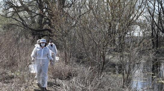 Обработку территорий от комаров начали в Павловске