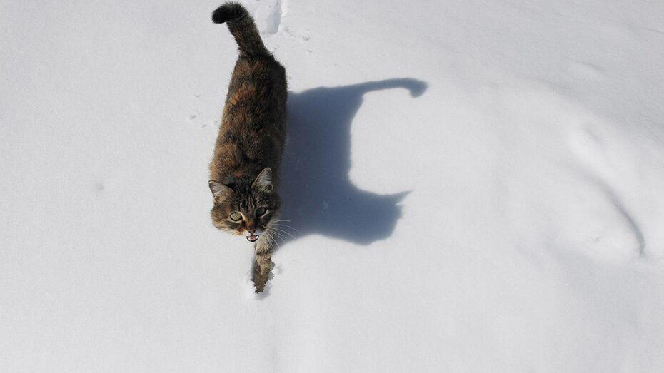 Воронежцев ждут снежные выходные