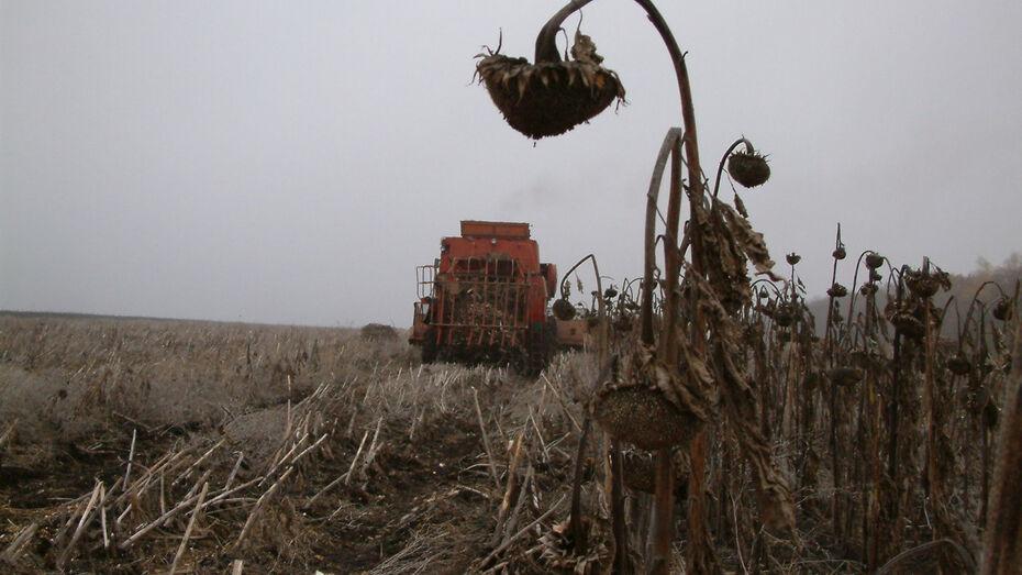 В Воронежской области задержали членов ОПГ, обманувших фермера на полмиллиона
