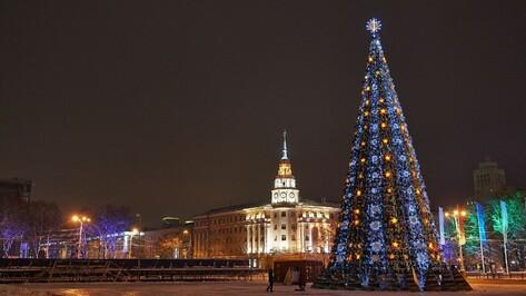 Чиновники объяснили высокую стоимость главной новогодней елки Воронежа