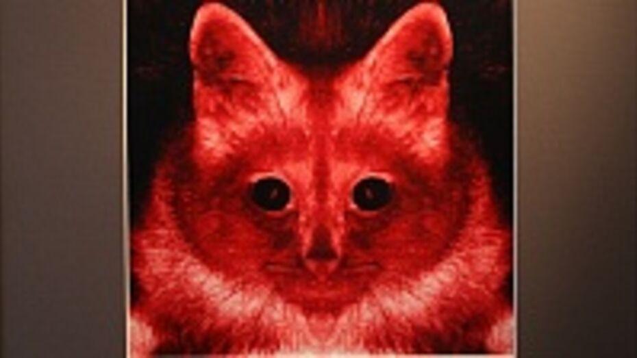 Воронежцам показали сюрреалистическую капусту и инфернальных котов