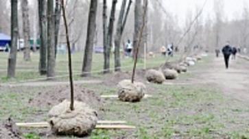 Жители Воронежской области высадили во время субботника более 3 тысяч деревьев
