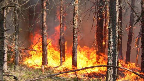 В Воронежской области критическая жара: риск пожаров возрос до максимума