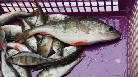 На Воронежском водохранилище поймали браконьера с сетями
