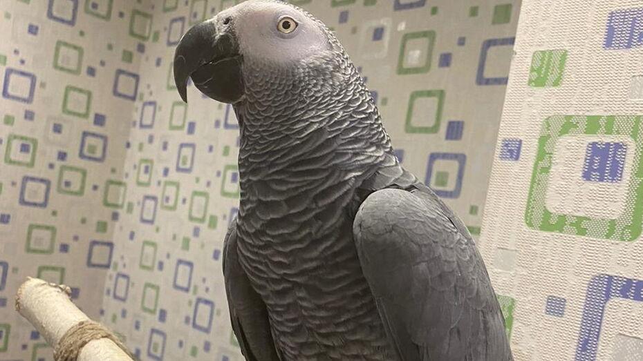 Жительница поселка под Воронежем держит дома попугаев 3 видов