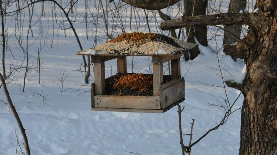 3 января воронежцев приглашают на массовую подкормку птиц