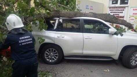 В Воронеже водитель Toyota пострадал при падении дерева на машину