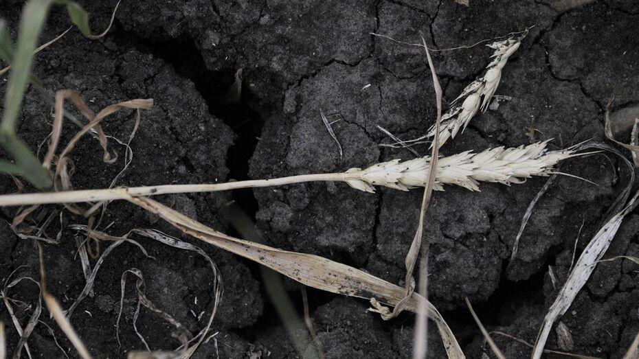 В Бутурлиновском районе оштрафовали воровавшего песок верхнемамонца
