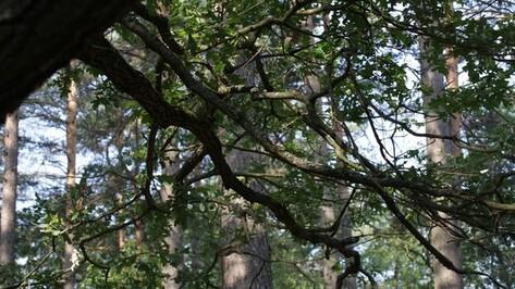 Воронежец повесился на дереве в лесу из-за депрессии