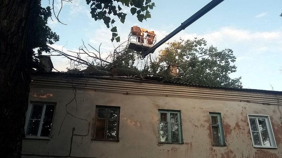 Ветер свалил 20-метровый тополь на крышу воронежского дома