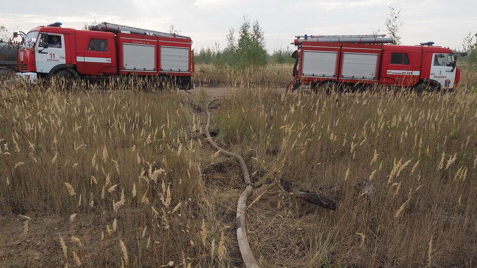 Дожди в Воронежской области не снизили пожарную опасность на юге региона