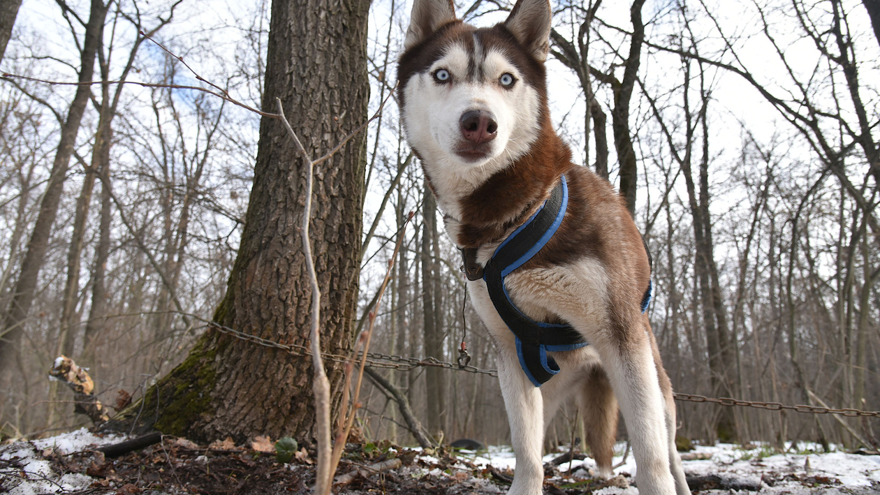 Две с половиной собаки. Нужно ли вводить норматив на домашних животных в Воронеже