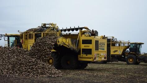 Острогожские аграрии закончили уборку сахарной свеклы