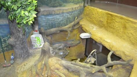 В Воронежском заповеднике усовершенствовали двухуровневый аквариум для бобров