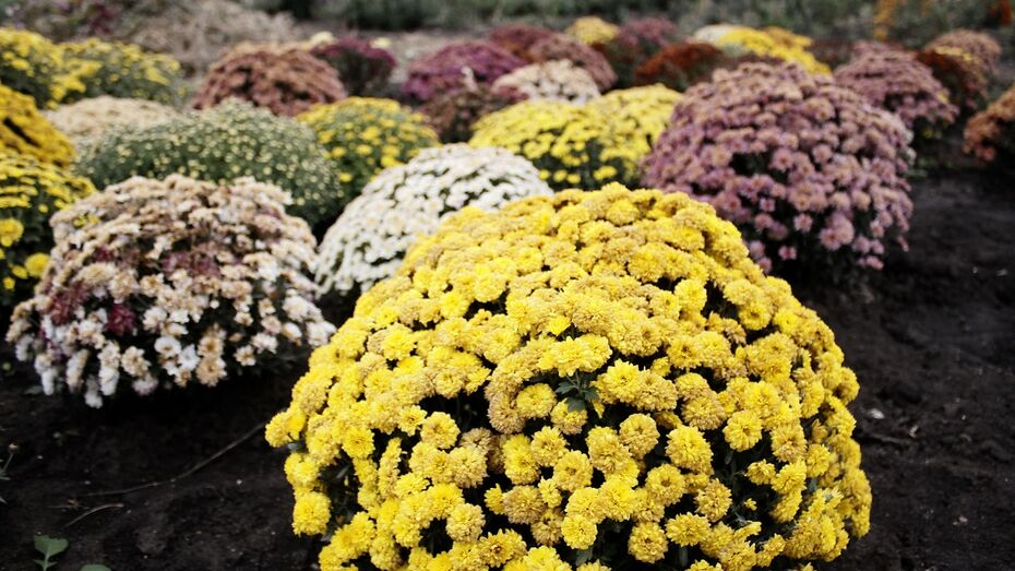 В Воронеже пройдет экологический конкурс «Город в цветах»